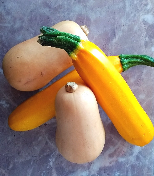 summer squash butternut pumpkin